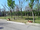 CAMPING COLL VERT, PINEDO, SPAGNA