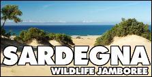 VIAGGI 4X4 - SARDEGNA WILDLIFE ISLAND