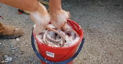 Lavaggio cavo sintetico per verricello