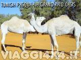 VIAGGI 4X4 - TUNISIA PASQUA 4X4 OASIS GRA...